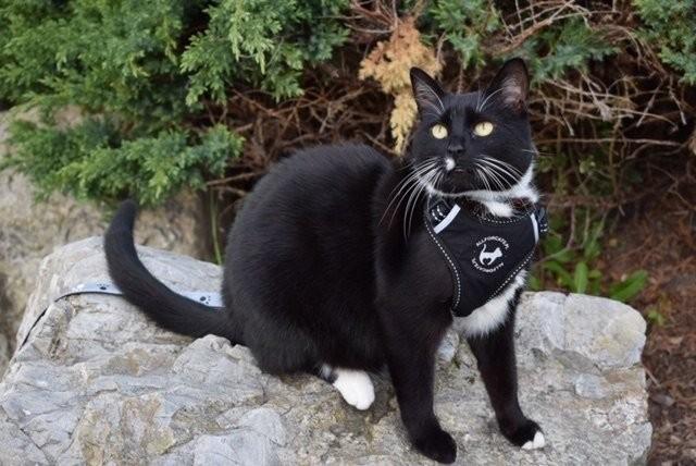 all for cats ALL FOR CATS Sportowe szelki Czarne S dla kota - 3 zdjęcie