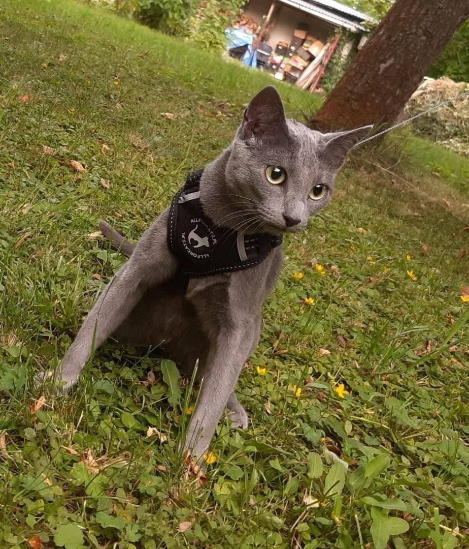 all for cats ALL FOR CATS Sportowe szelki Czarne S dla kota - 1 zdjęcie