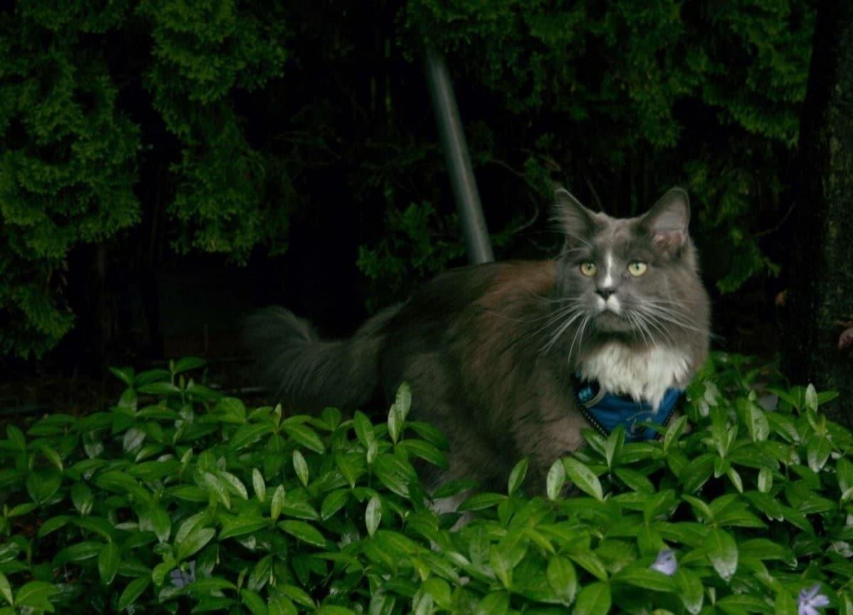 all for cats ALL FOR CATS Sportowe szelki Niebieski S dla kota - 1 zdjęcie