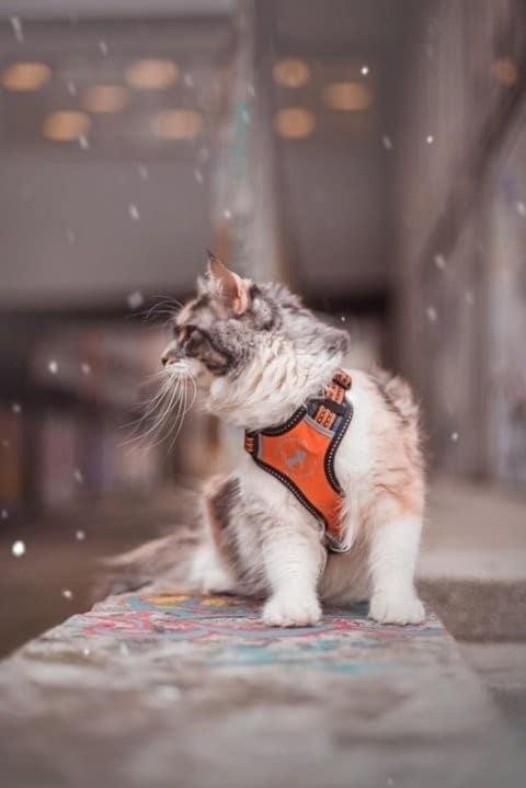 all for cats ALL FOR CATS Sportowe szelki Pomarańczowe S dla kota - 2 zdjęcie