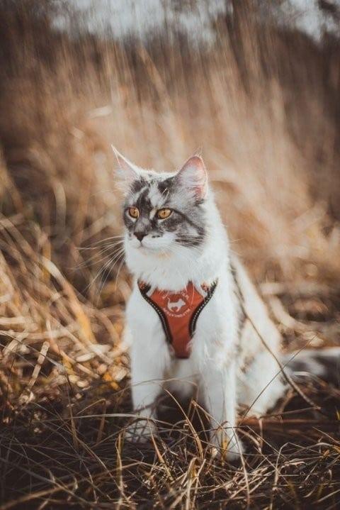 all for cats ALL FOR CATS Sportowe szelki Pomarańczowe S dla kota - 3 zdjęcie