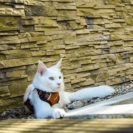 all for cats ALL FOR CATS Sportowe szelki Pomarańczowe S dla kota - 5 zdjęcie